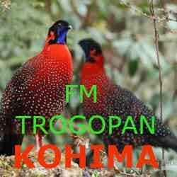 FM Tragopan Kohima
